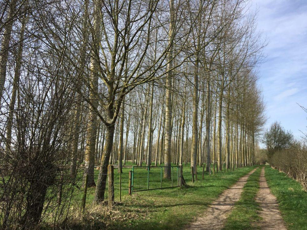 wandelpad in natuurgebied Aronsthoek
